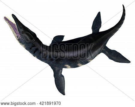 Liopleurodon Reptile Tail 3d Illustration - Liopleurodon Was A Carnivorous Marine Plesiosaur That Li