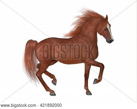 Thoroughbred Stallion 3d Illustration - The Thoroughbred Is Best Known For Horse Racing And Can Come