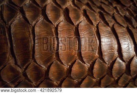 Close Up Of Black Snake Texture. Dark Reptile Skin Background