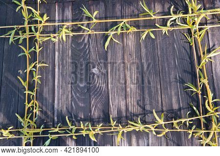 Branches Of A Tree With Young Leaves Lie On A Worn Wooden Surface Around The Perimeter