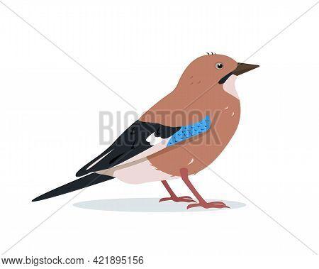 Eurasian Jay Bird Icon For Ornithology Or Nature Design.