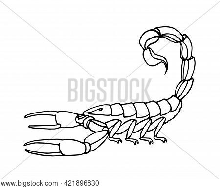 Decorative Scorpion, Dangerous Poisonous Insect, Predator, Vector Illustration With Black Ink Contou