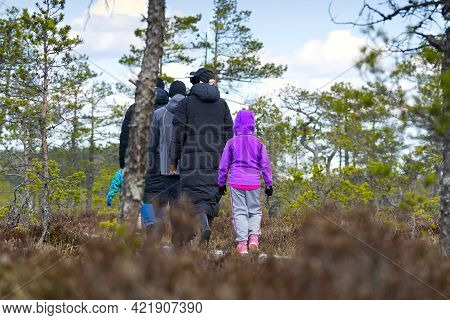 Group Of Young People Walking Along Duckboards On Bog. Nature Exploring. Friends Hiking In The Bog O