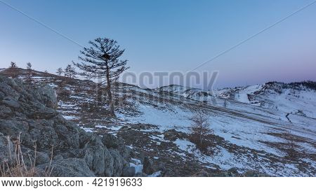 The Hillsides Are Covered With Snow. Bare Trees Are Against The Background Of The Pinkish Morning Sk