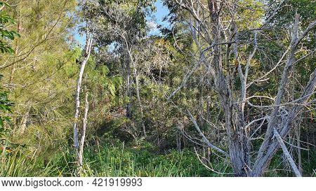 Australian Nature Bush Reserve in Residential Estate Queensland Australia