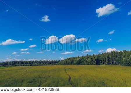 Path In The Field Grass. Meadow Picturesque Summer Landscape With Clouds On Blue Marvelous Sky View