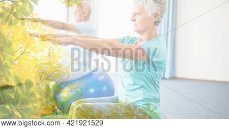 Composition of senior man and woman exercising on swiss balls in fitness class with tree overlay. retirement, fitness and active lifestyle concept digitally generated image.