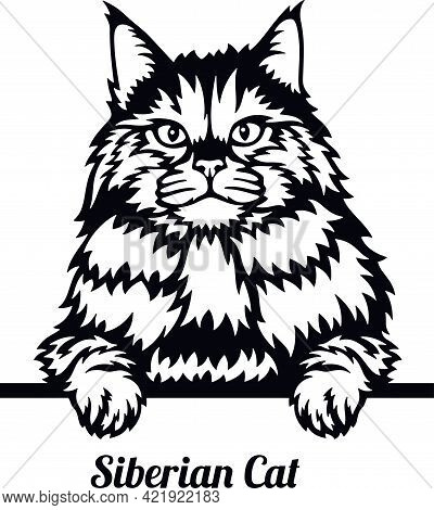 Siberian Cat - Cat Breed. Cat Breed Head Isolated On A White Background
