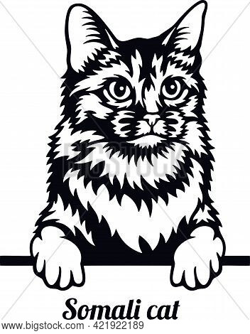 Somali Cat - Cat Breed. Cat Breed Head Isolated On A White Background