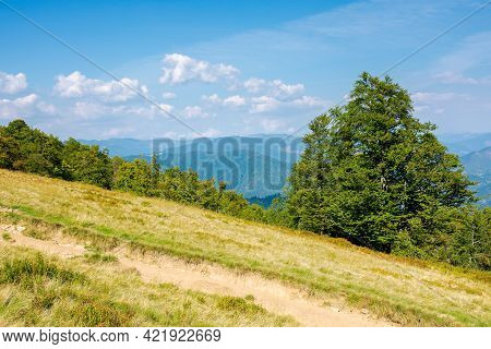 Beech Trees On The Grassy Meadow. Mountain Scenery On A Bright Afternoon In Early Autumn. Wonderful