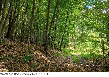 Footpath Through Ancient Beech Forest In Dappled Light. Beautiful Nature Of Carpathians In Summer