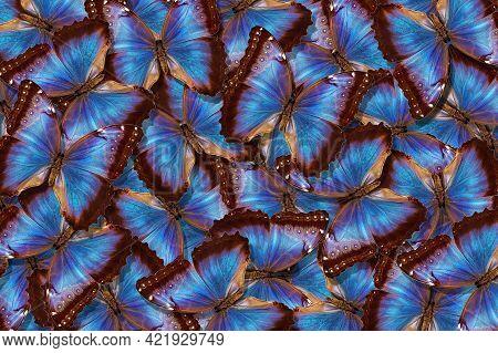 Blue Abstract Texture Background. Butterflies Morpho. Wings Of A Butterflies Morpho. Flight Of Brigh