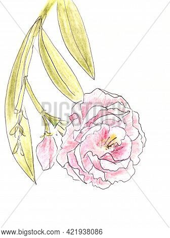 Branch Of Blooming Terry Oleander, Graphic Color Drawing On A White Background
