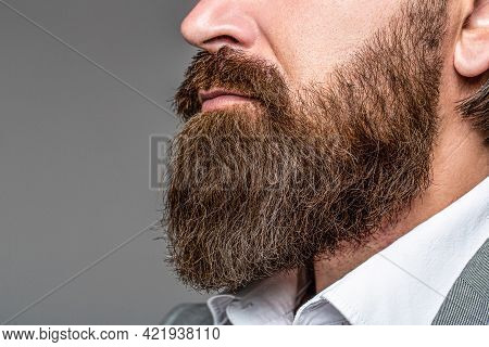 Perfect Beard. Close-up Of Young Bearded Man. Close Up Of Handsome Beard Hipster Elegant Male. Beard