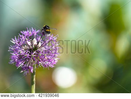 Concept Of Population Decline Of The Bumblebee Anthophila Due To Environment Issues Including Weathe
