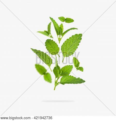 Fresh Flying Green Mint Leaves, Lemon Balm, Melissa, Peppermint Isolated On Light Gray Background Fl