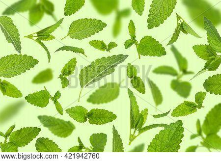 Fresh Flying Green Mint Leaves, Lemon Balm, Melissa, Peppermint Isolated On Green Background Flat La