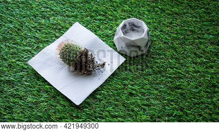 Transplant The Cactus Into A New Flower Pot. Flat Lay Of Home Gardening With Bare Root Cactus In The