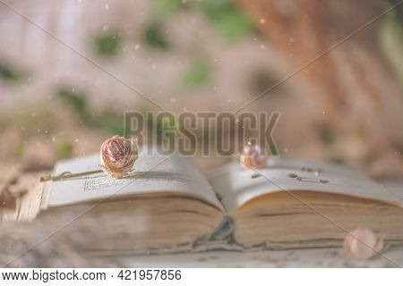 Book With Flower Rose. Romance, Nature, Reading, Love