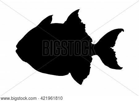 Vector Isolated Fish Elements Greg Triggerfish Black Silhouette, Hand-drawn Tropical Aquarium Fish I