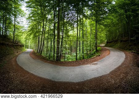Spectacular Horse-shoe Curved Road Inside Beech Forest
