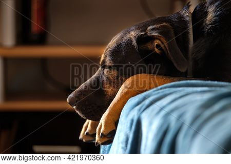 Breedless Dog Portrait, Black Mixed Breed Canine Looking Straight Ahead