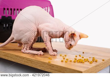 Cat Accessories Set, Pet Animal Stuff, Bowl Of Kitty Dry Food Near Pink Mauve Portable Cage. Sphynx