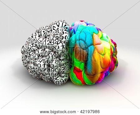 Esquerdo e cérebro direito conceito frente