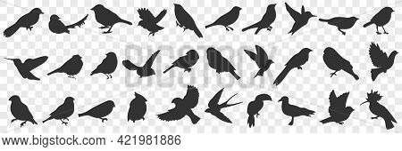 Silhouettes Of Birds Doodle Set. Collection Of Hand Drawn Various Black Silhouettes Of Flying Sittin