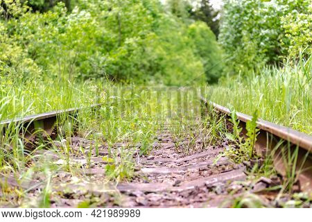Railway Tracks Overgrown With Grass. Old Rails Going Into The Forest. Rails Close-up.