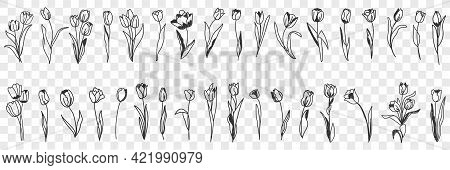 Tulip Flowers Decoration Doodle Set. Collection Of Hand Drawn Various Blooming Tulip Floral Pattern