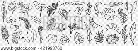 Natural Leaves Pattern Doodle Set. Collection Of Hand Drawn Various Natural Leaf Wallpaper Patterns