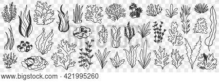 Growing Plants Silhouettes Doodle Set. Collection Of Hand Drawn Various Types Of Grass And Plants Gr