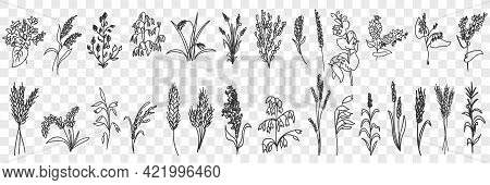 Fields Grass And Plants Doodle Set. Collection Of Hand Drawn Various Grass Growing On Field Blooming