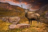 Dramatic sunset with beautiful sky over mountain range giving a strong moody landscape and red deer stag looking strong and proud poster