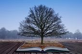 Single bare tree grows out of pages in magical book poster
