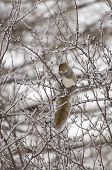 a squirrel eating on a ice covered branch poster