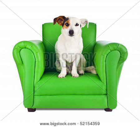 Jack Russell Sitting On A Green Armchair