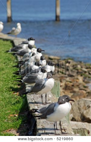 Seagulls Resting On An Ocean Wall