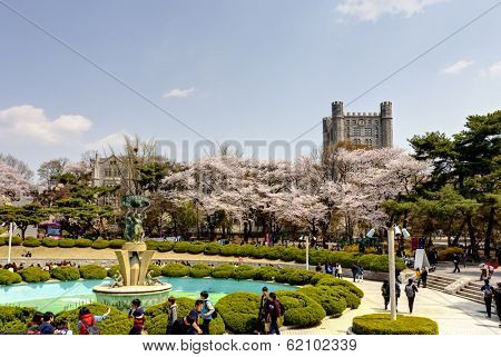 SEOUL, KOREA-APRIL 18: Students are walking at the campus which is lined with cherry trees of full blossoms in Kyung Hee University on April 18, 2013 in Seoul, Korea.
