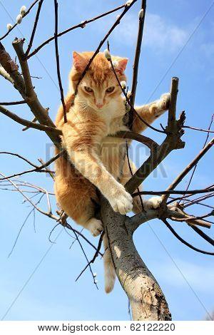 Cat on willow