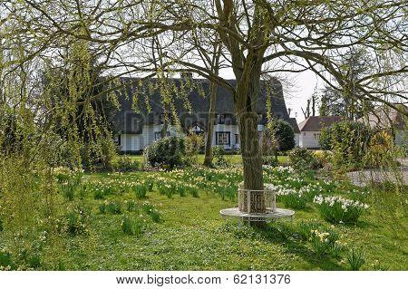 Cottage Garden In Spring