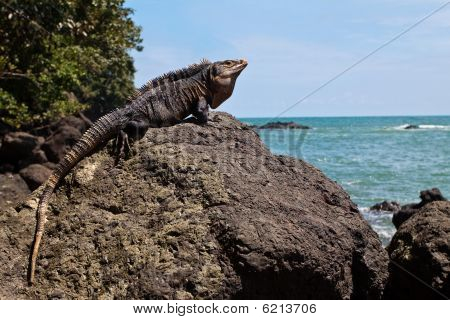 Grey lizard sitting on a stone near the sea poster