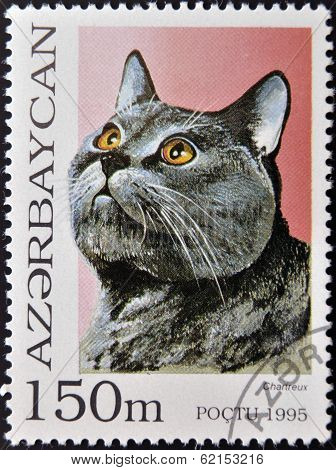 A stamp printed in Azerbaijan shows cat Chartreux