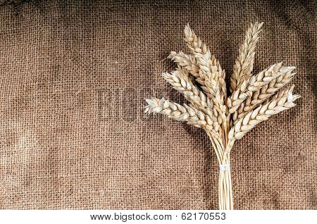 Wheat Ears.