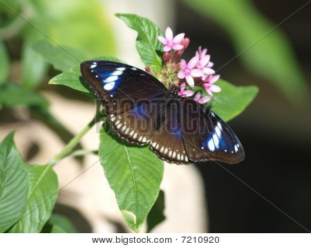 The Blue Clipper