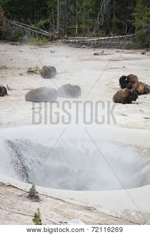 Bison Spa Day