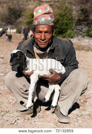 Herdsman With Sheep With Typical Nepali Hat On Head