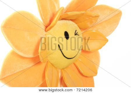 Happy Flower Close-up