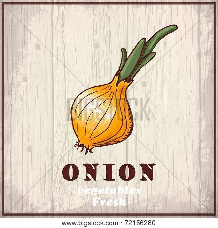Fresh vegetables sketch background. Vintage hand drawing illustration of a onion
